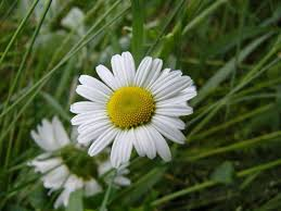 Types Of Planting Flowers - annual plants and flowers annual garden flowers types of plants