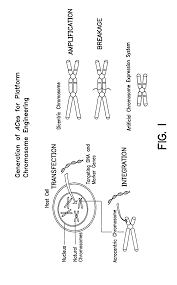 patent us7521240 chromosome based platforms google patents