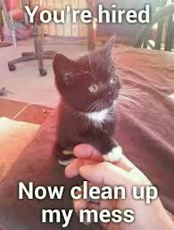 Funny Kitten Meme - 109 best cat memes images on pinterest funny things ha ha and