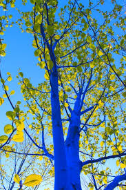 file blue tree in leaf closeup dimopoulos jpeg wikimedia commons