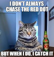 Meme Creator Most Interesting Man - most interesting cat in the world meme generator imgflip