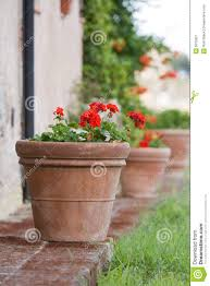 terracotta pots geraniums in a terracotta pot stock image image 6010821