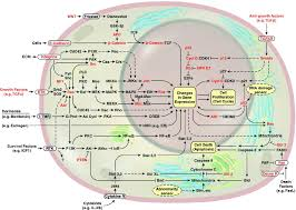 the hallmarks of cancer cell