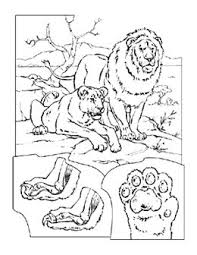25 lion coloring pages ideas coloring