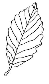 traceable leaf patterns kids coloring