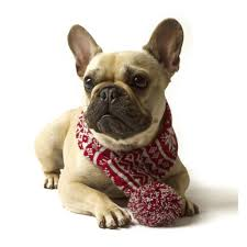 dog scarf in snowflake design pet clothes u0026 fashion cuckooland