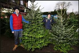 real christmas trees for sale revealed where can you find the cheapest real christmas tree in