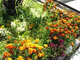 flowers in garden images file flowers in garden jpg wikimedia commons