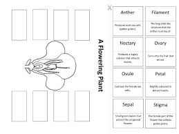woodland habitat worksheets differentiated by hammondbeth