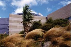 designing with native plants landscaping landscapedesign co nz