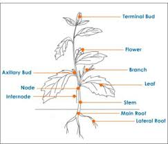 plant classification test questions tutorvista com