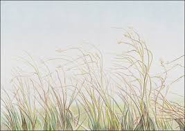 drawing autumn grass in colored pencil carrie l lewis artist