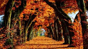 fall trees hd wallpaper 1497852