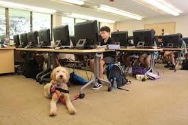 service dog joins hba ohana