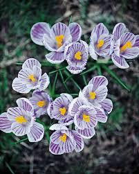 Beautiful Pictures Of Spring by Martha Stewart Living U0027s Favorite Spring Flowers Martha Stewart