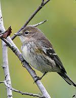 Florida Backyard Birds - list of birds of florida wikipedia