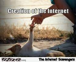 Internet Meme Cat - creation of the internet cat meme pmslweb