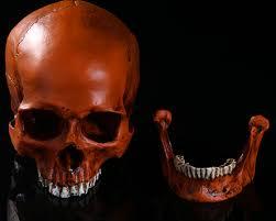 skeleton craft for kids promotion shop for promotional skeleton