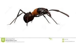 eye level view of an ant stock illustration image 57677793