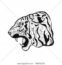 tiger images illustrations vectors tiger stock photos u0026 images