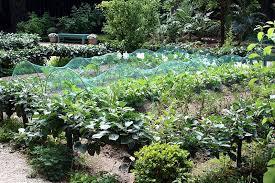 vegetable gardening from beginning to end mid atlantic gardener