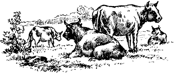 cattle clipart etc