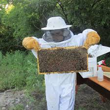 tales from beekeeping my expectations vs the reality urbanfarmu