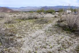 bloom reports from the anza borrego desert 2014 2015