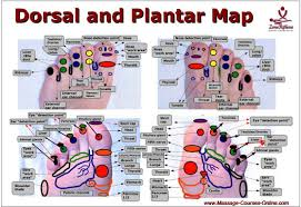 Foot Reflexology Map Foot Reflexology Video Course 1st Level Massage Courses