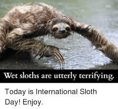 Sloth Fitness Meme - 25 best memes about wet sloth wet sloth memes