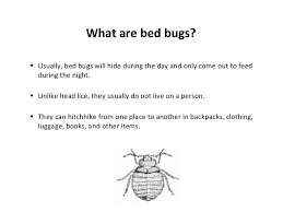 How Often Do Bed Bugs Reproduce Bed Bugs In Schools