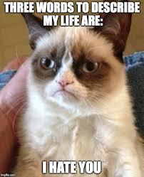 True Life Meme - true life of a popular internet meme imgflip