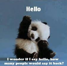 Hello Meme Funny - hello hello panda funny gags and memes