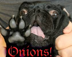 are onions for dogs 11 thanksgiving staples that are hazardous to pups barkpost