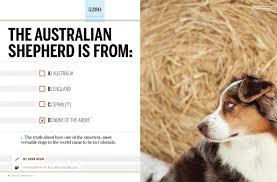 australian shepherd jobs the australian shepherd is from a australia b england c