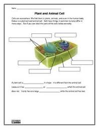 animal cell coloring doc cakepins com teacher things pinterest