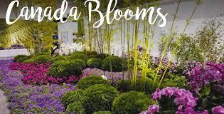 the world u0027s best flower shows 2017 the koch blog