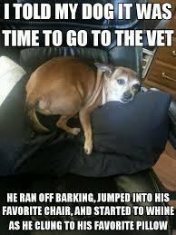 Dog At Vet Meme - poor dog lol meme by pvt tellytubby memedroid