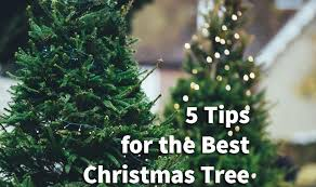 Christmas Tree Stop - 5 tips for the best christmas tree u2014 andrewmiguelez com