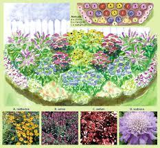 perennial border flowers sunny perennial border 17 plants buy
