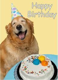 Happy Birthday Meme Dog - top 10 happy birthday dog images for animal lovers