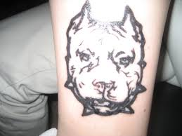 4 pit bull dog tattoo on forearm images