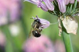 plants native to new york everything you ever wanted to know about bees the student