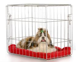 crate training 8 steps to crate train a puppy fast complete guide
