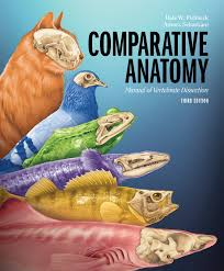 comparative anatomy fishbeck image collections learn human