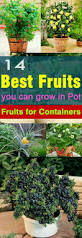 best fruits to grow in pots apartment gardening ideas on pinterest