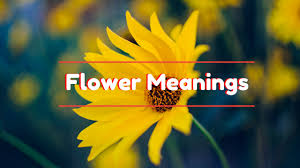 flower meanings the meaning of different type of flowers youtube