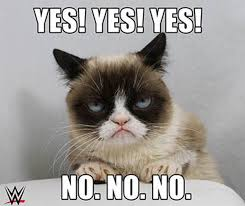 Grumpy Cat Yes Meme - no explosions read our faq for celebrity cat appearances catster