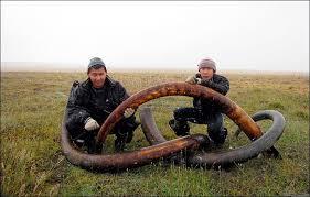warning vandalism mammoth graveyards arctic