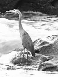 heron meaning the meaning of life the tenth muse